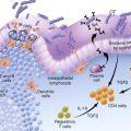 sistema immunitario intestinale